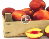 Nectarine Producing Countries