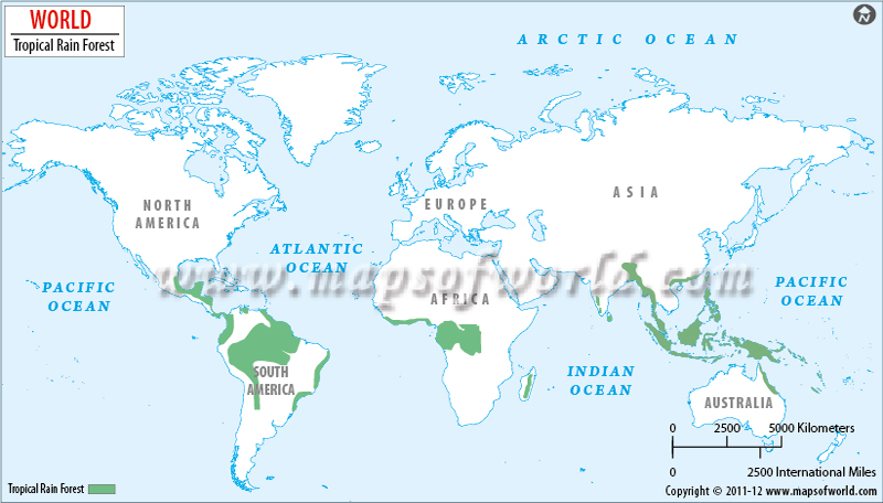 World rainforests map rainforests of the world rainforests of the world gumiabroncs Choice Image