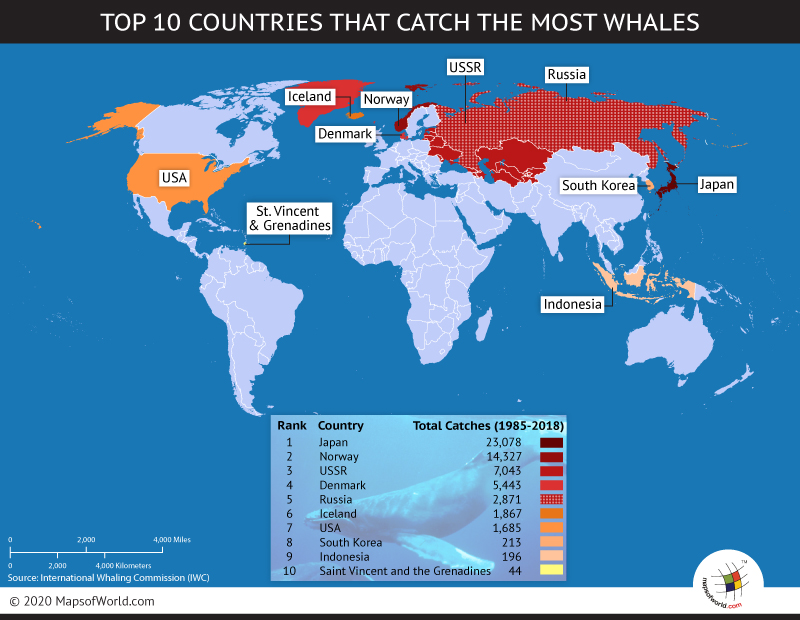 Countries that catch most whales world top ten top ten countries that catch most whales gumiabroncs Gallery