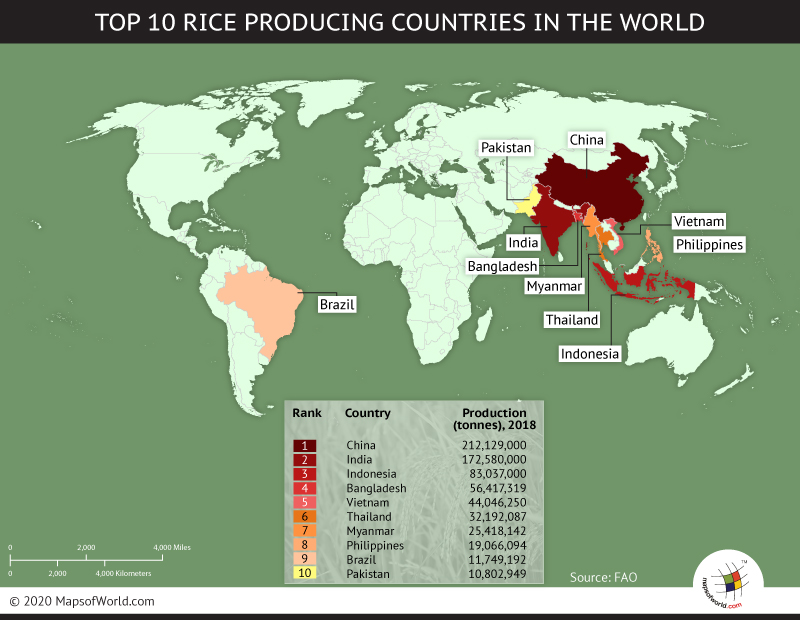 Top Ten Countries With Most Rice Producing Countries